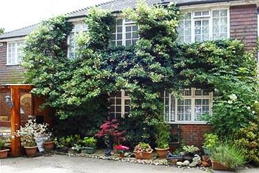 bnb reviews Da Vinci Guest House