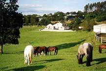 Muckross Stables   Killarney