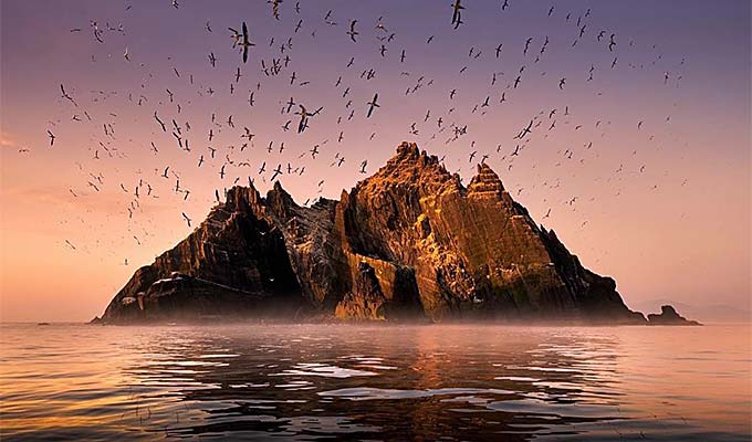 Skelligs attract all kinds of seabirds